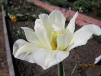 Тюльпаны - Страница 2 Dt-0UWC