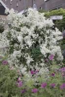 Лето в наших садах - Страница 9 Dt-2F1B