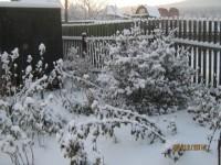 Зима в саду - Страница 2 Dt-C3F0