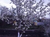 Расцветали яблони и груши... Dt-JVD9