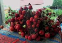 Расцветали яблони и груши... - Страница 2 Dt-TLBA