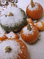 a29c834057cc16252beccf0d8e4b2d31 тыква в снегу